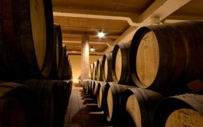 Discovering the most well-known wines of Maremma Region , Bolgheri and Brunello di  Montalcino.